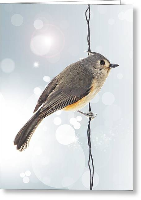 Twinkle Greeting Cards - Tufted Titmouse Twinkle Greeting Card by Bill Tiepelman