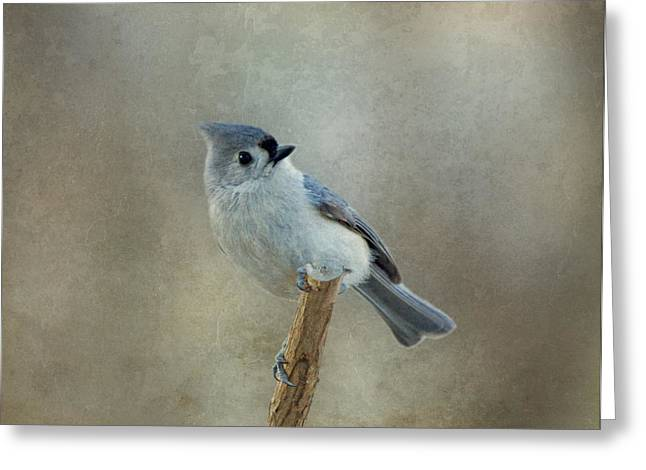 Gray Bird Greeting Cards - Tufted Titmouse Watching Greeting Card by Sandy Keeton