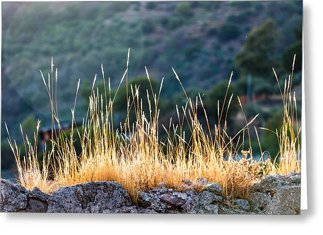 Mud Season Greeting Cards - Tufts of dry grass Greeting Card by Salvatore Pappalardo