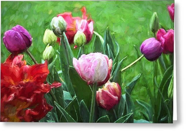 Pamela Cooper Greeting Cards - Tulip 54 Greeting Card by Pamela Cooper