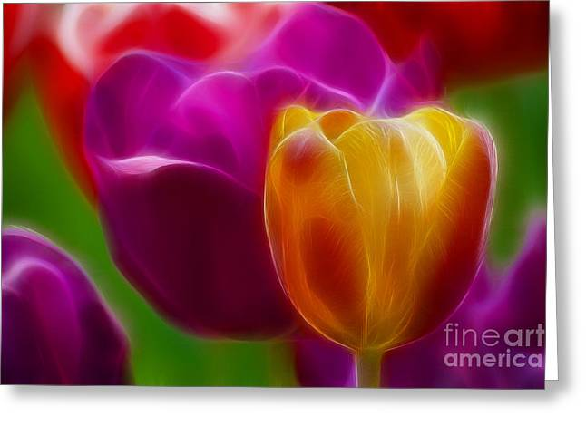 Gingrich Photography Digital Art Greeting Cards - Tulip-7011-Fractal Greeting Card by Gary Gingrich Galleries