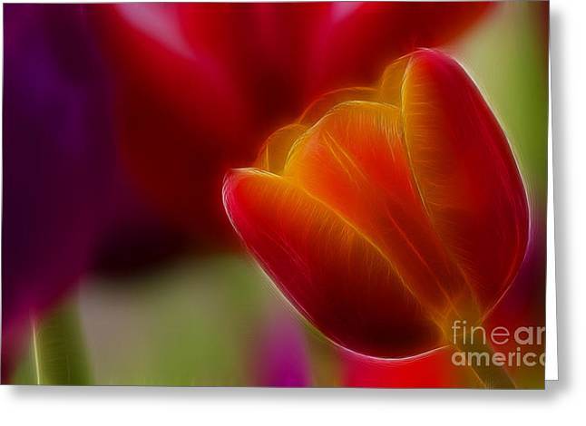 Gingrich Photography Digital Art Greeting Cards - Tulip-7020-Fractal Greeting Card by Gary Gingrich Galleries
