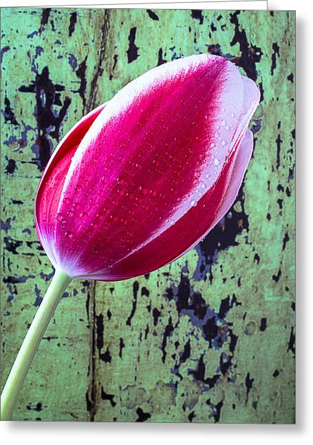 Rain Drop Greeting Cards - Tulip against green wall Greeting Card by Garry Gay