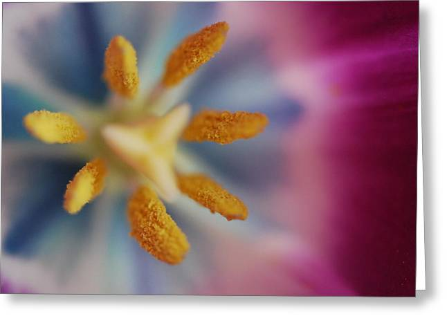Get Well Card Framed Prints Greeting Cards - Tulip Greeting Card by Andrada Anghel