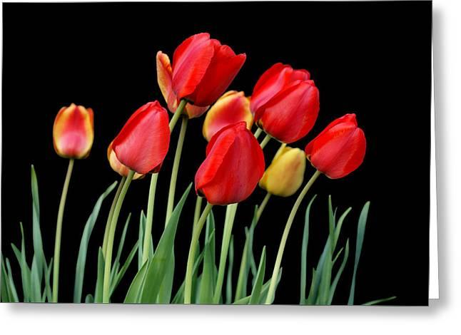 Tulip Band Greeting Card by Nikolyn McDonald