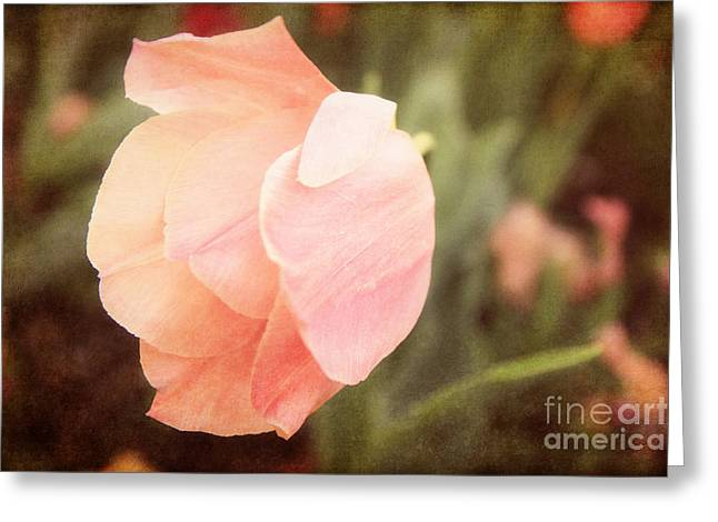 Mother Gift Photographs Greeting Cards - Tulip Blush Greeting Card by Emily Kay