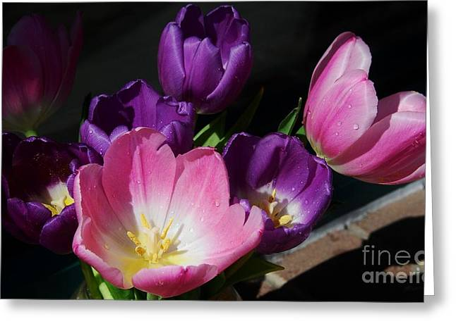 Pinks And Purple Petals Photographs Greeting Cards - Tulip Bouquet 1 Greeting Card by Marcus Dagan