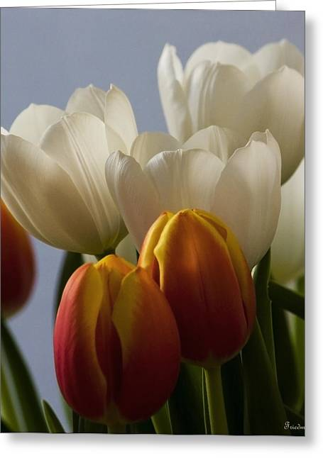 Michael Friedman Greeting Cards - Tulip Bouquet Greeting Card by Michael Friedman