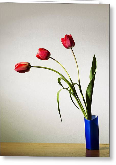 Flowerpots Greeting Cards - Tulip composition Greeting Card by Ivan Vukelic