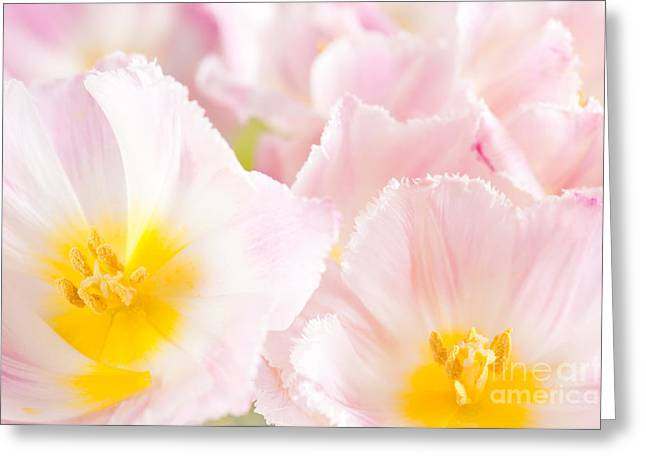 Subtle Pink Tulip Macro Inside  Greeting Card by Arletta Cwalina