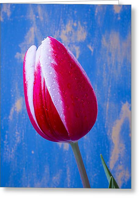 Rain Drop Greeting Cards - Tulip Dream Greeting Card by Garry Gay