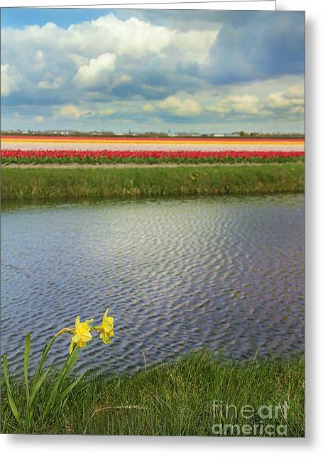 Colorful Blooms Greeting Cards - Tulip fields 4 Greeting Card by Jasna Buncic