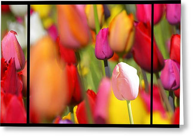 Organic Greeting Cards - Tulip Fields Greeting Card by AdSpice Studios