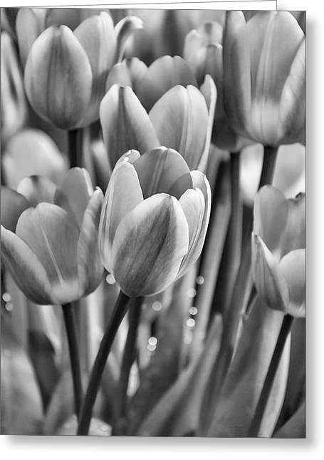 Lack And White Greeting Cards - Tulip Flower Garden in Black and White Greeting Card by Jennie Marie Schell