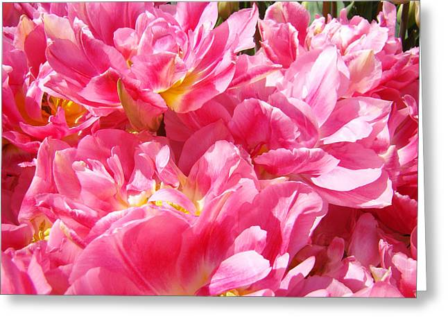 Popular Flower Art Greeting Cards - Tulip Flowers Gardens Art Prints Pink Tulip Flowers Greeting Card by Baslee Troutman