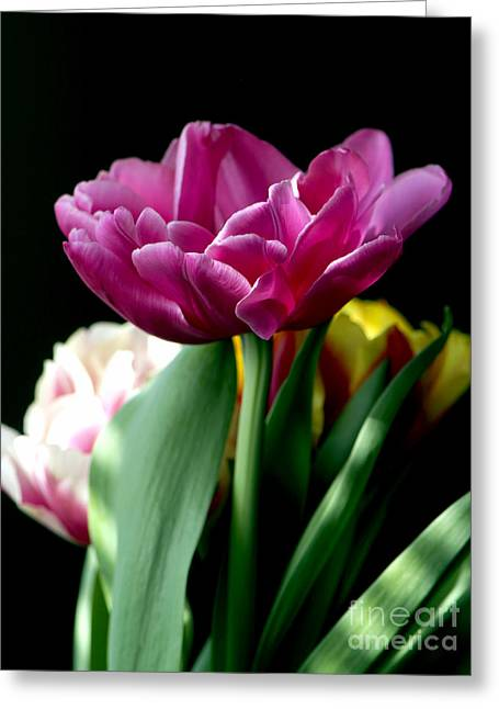 Tulip For Easter Greeting Card by Sharon Talson