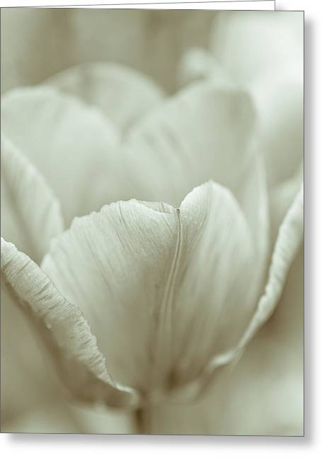 Artsy Greeting Cards - Tulip Greeting Card by Frank Tschakert