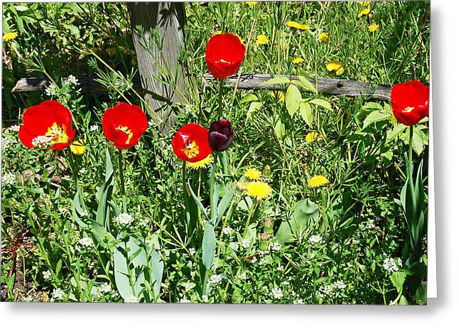 Recently Sold -  - Blooms Greeting Cards - Tulip Garden Greeting Card by Aimee L Maher Photography and Art