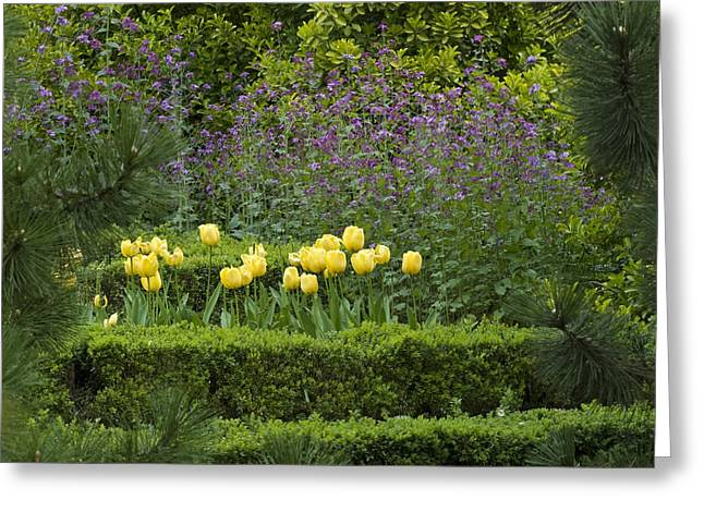 Secret Gardens Greeting Cards - Tulip Garden Greeting Card by Frank Tschakert