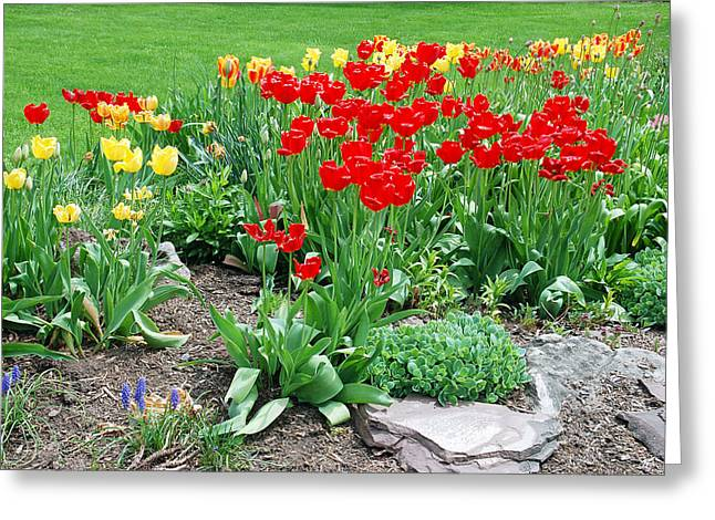 Garden Greeting Cards - Tulip Gardenscape Greeting Card by Aimee L Maher Photography and Art Visit ALMGallerydotcom