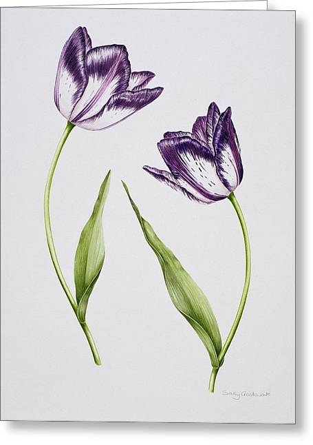 Tulip Habit De Noce Greeting Card by Sally Crosthwaite