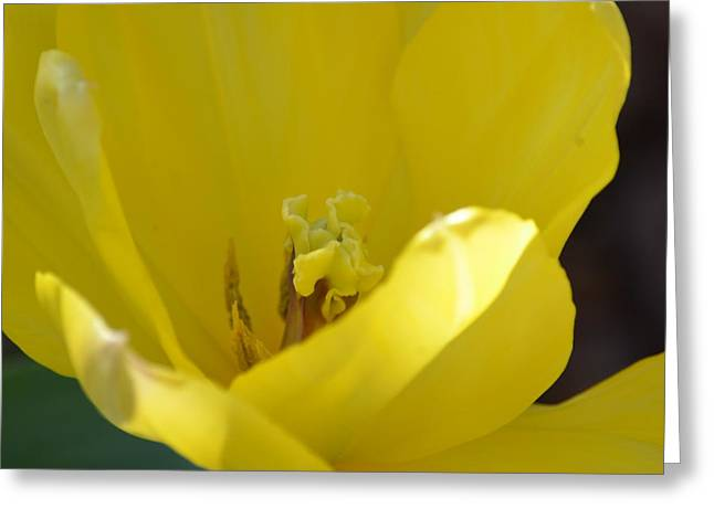Tulip Heart Greeting Card by Maria Urso