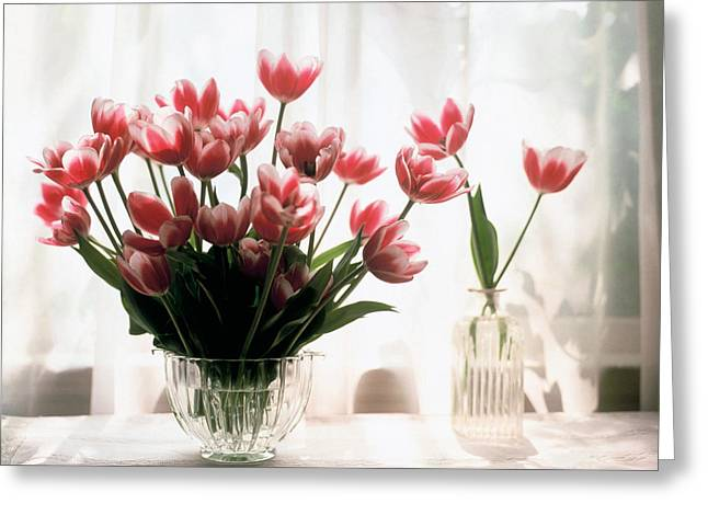 Tulip Greeting Card by Jeanette Korab
