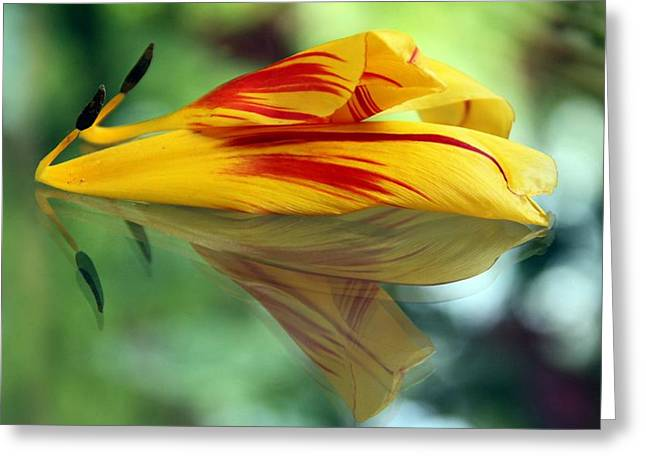 Andrea Lazar Greeting Cards - Tulip Reassembled 2 Greeting Card by  Andrea Lazar