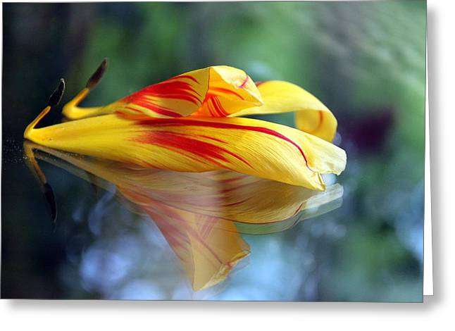 Andrea Lazar Greeting Cards - Tulip Reassembled 3 Greeting Card by  Andrea Lazar
