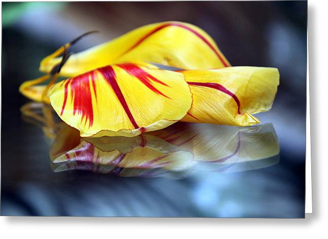 Andrea Lazar Greeting Cards - Tulip Reassembled 4 Greeting Card by  Andrea Lazar