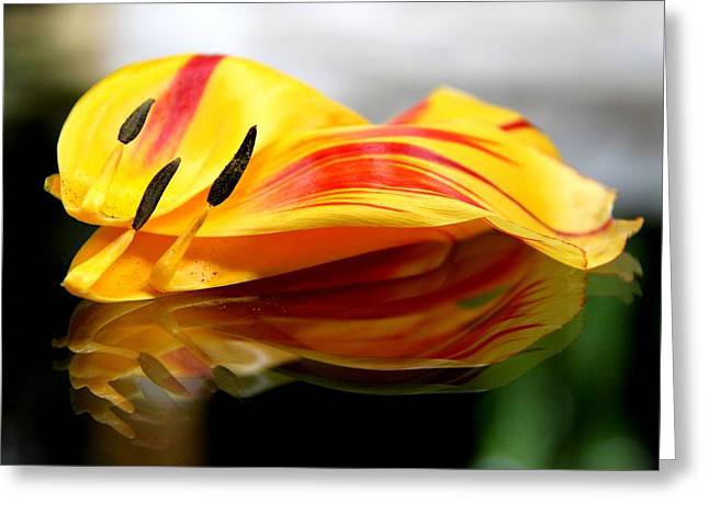 Tulip Reassembled Greeting Card by  Andrea Lazar