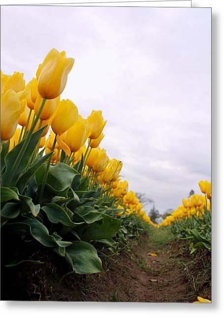 Tulip Tree Digital Art Greeting Cards - Tulip Row Greeting Card by Kami McKeon