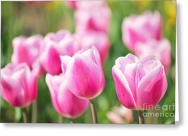 Tulip Time Greeting Card by Angela Doelling AD DESIGN Photo and PhotoArt