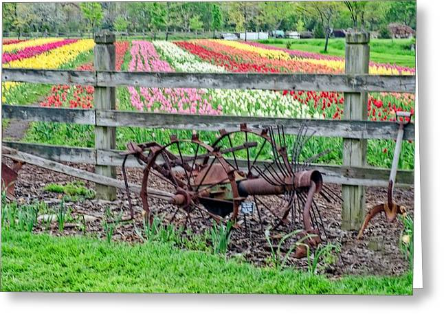 Tulip Time Greeting Card by Cheryl Cencich
