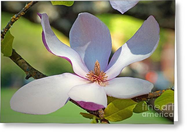 Tulip Tree Greeting Cards - Tulip Tree Bloom Greeting Card by Gwyn Newcombe