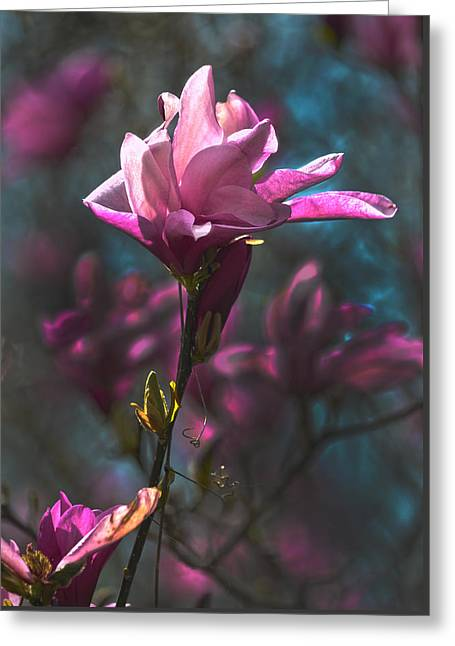 Tulip Tree Blossom Greeting Card by Sandi OReilly