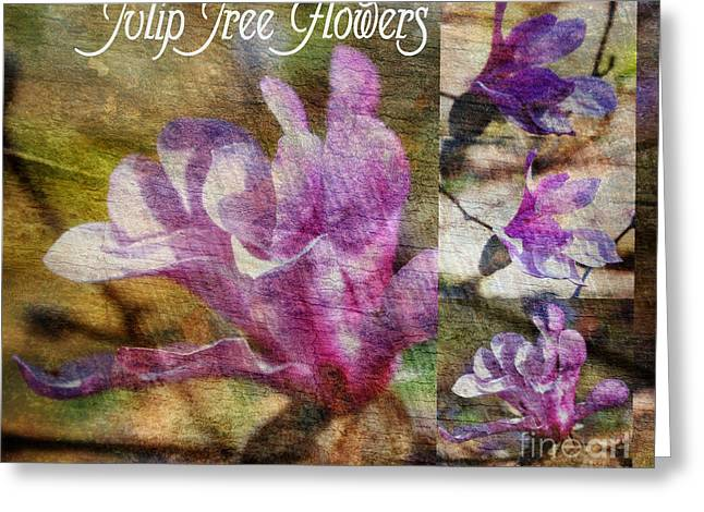 Whiteoaks Photography Greeting Cards - Tulip Tree Flower Collage Greeting Card by Eva Thomas