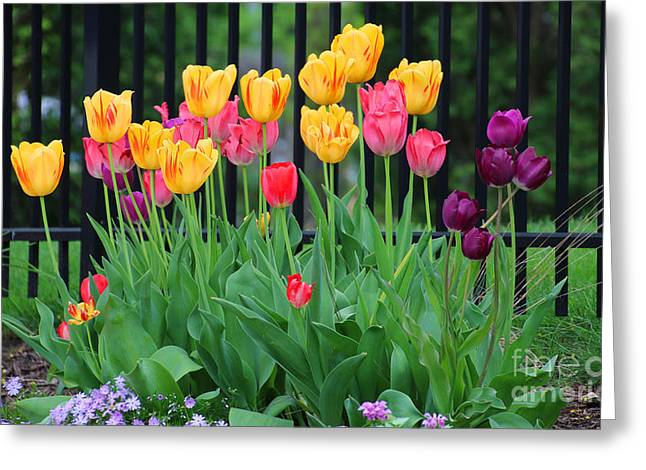 Flower Works Greeting Cards - Tulips 5181 Greeting Card by Jack Schultz
