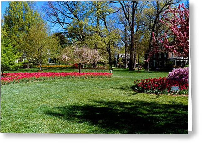 Garden Scene Greeting Cards - Tulips And Cherry Trees In A Garden Greeting Card by Panoramic Images