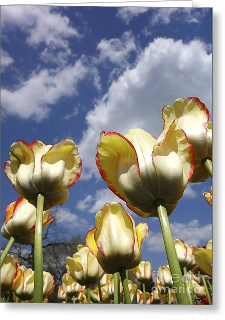 Springy Greeting Cards - Tulips and Clouds Greeting Card by Jacqueline Athmann
