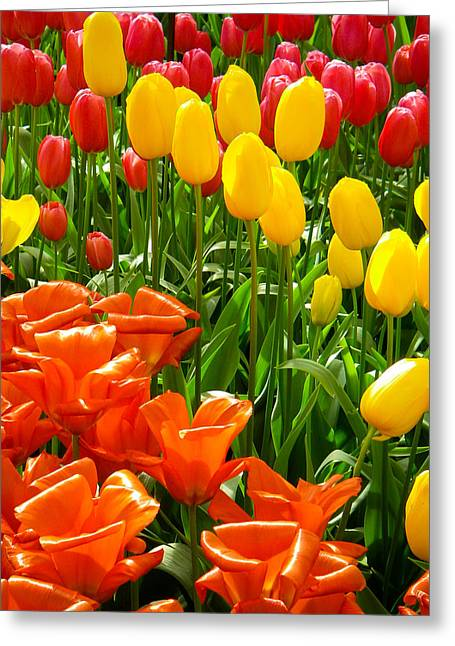 Geobob Greeting Cards - Tulips and Colors Galore at the Keukenhof Gardens Lisse Netherlands Greeting Card by Robert Ford