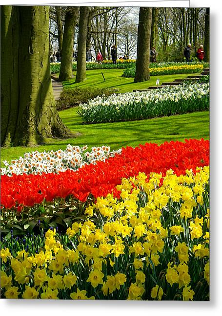 Geobob Greeting Cards - Tulips and Daffodils in Forested Landscape Keukenhof Gardens Lisse Netherlands Greeting Card by Robert Ford