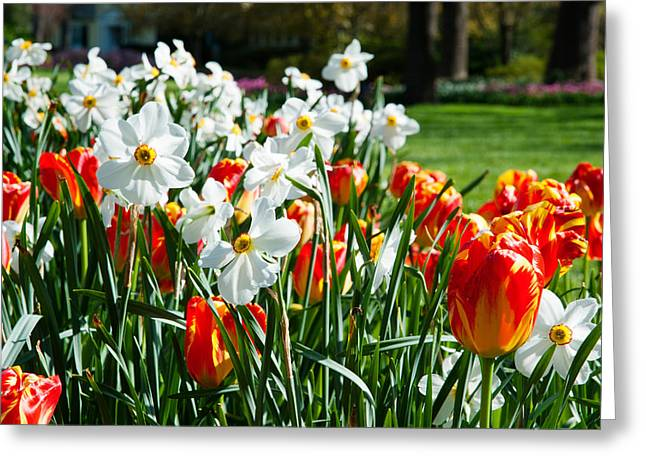 Garden Scene Photographs Greeting Cards - Tulips And Other Flowers At Sherwood Greeting Card by Panoramic Images