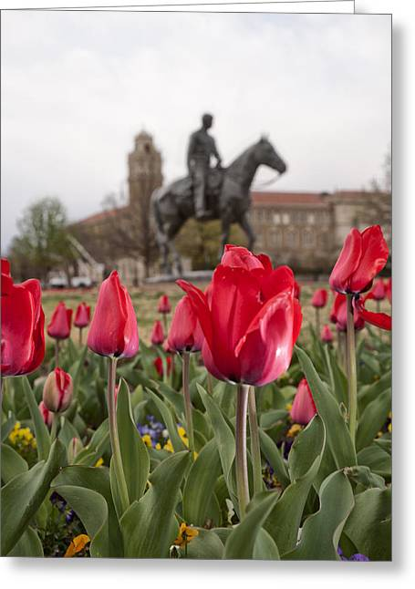 Lubbock Greeting Cards - Tulips at Texas Tech University Greeting Card by Melany Sarafis