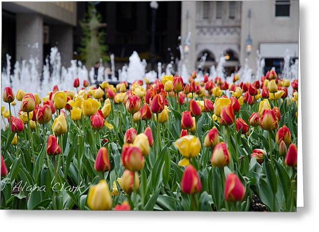 Daley Plaza Greeting Cards - Tulips at the Plaza Greeting Card by Lainie Clark