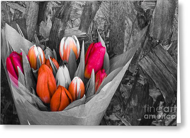 Pinks And Purple Petals Greeting Cards - Tulips Greeting Card by Babs Gorniak
