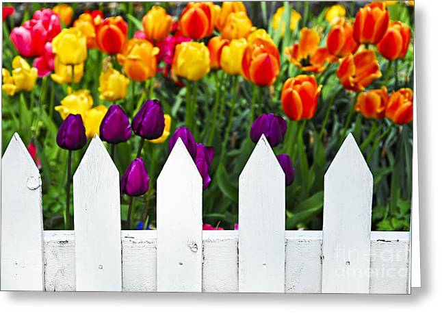 Painted Wood Greeting Cards - Tulips behind white fence Greeting Card by Elena Elisseeva