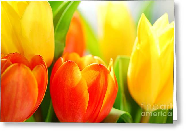Shining Light Greeting Cards - Tulips Greeting Card by Elena Elisseeva