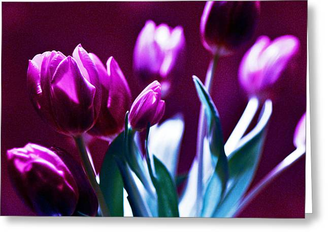 Botanical Pyrography Greeting Cards - TULIPS - Fuchsia Greeting Card by Silva Wischeropp