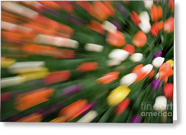 Linda Matlow Greeting Cards - Tulips Gone Wild Abstract Greeting Card by Linda Matlow